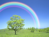 Rainbow Over a Tree Photographic Print