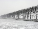 Dike with Cottonwoods in Winter Photographic Print by Guenter Rossenbach