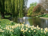 Regents park london Photographic Print