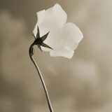 Small White Flower Stands Against Dramatic Sky Photographic Print by Tom Marks