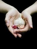 Handful of Garlic Fotografisk tryk af Elisa Lazo De Valdez