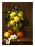 A Still Life of Lemons and Oranges Giclee Print by A Mensaque