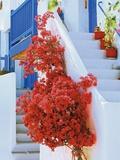 Flowers Blooming on Stairway Fotografisk tryk af Jean-pierre Lescourret
