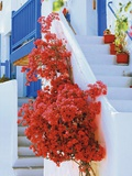Flowers Blooming on Stairway Photographic Print by Jean-pierre Lescourret