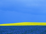 Flax and Canola Fields Under Stormy Sky Photographic Print by Mike Grandmaison