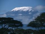 Kilimanjaro og akacietræer Fotografisk tryk