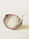 Shallot Clove Photographic Print by Cora Buttenbender