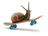 Snail Riding Skateboard Photographic Print by Martin Gallagher