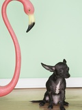 Chihuahua next to a pink flamingo Photographic Print