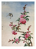 18th-Century Chinese Watercolor of Pink Flowers Giclee Print