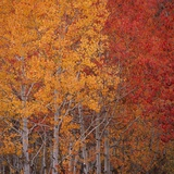 Deciduous Trees in Autumn Photographic Print by Micha Pawlitzki