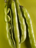 Broad Beans Photographic Print by Cora Buttenbender