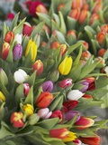 Bunches of colorful tulips Photographic Print by Markus Altmann