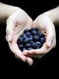 Handful of Blueberries Fotografisk tryk af Elisa Lazo De Valdez