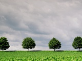 Cloudy Sky and Row of Trees in Countryside Photographic Print by  Josef