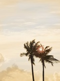 Sunlit Palm Trees Photographic Print