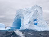 Blue Iceberg Sculpted by Waves and Southern Giant Petrel in Flight Photographie par John Eastcott & Yva Momatiuk