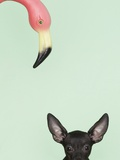 Chihuahua underneath a pink flamingo Photographic Print