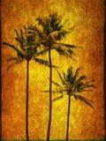Three Palms Photographic Print by Doug Landreth