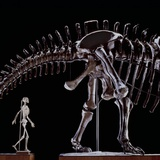 Human Skeleton and Apatosaurus Louisae Photographic Print by Louie Psihoyos