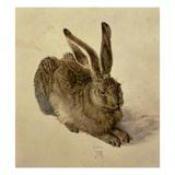 Hase Giclée-Druck von Albrecht Dürer