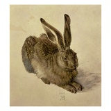 Hare Giclee Print by Albrecht Durer