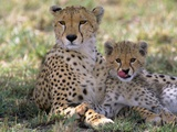 Cheetah Mother and Cub Resting in Shade Together Fotografisk tryk af John Eastcott & Yva Momatiuk