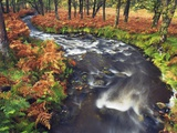 Stream Flowing Through Woods Photographic Print by Frank Krahmer