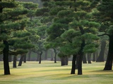 Pine Trees in Garden Photographic Print by Bruno Ehrs