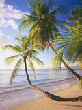 Pigeon Point Beach, Island of Tobago Photographic Print by George H.H. Huey