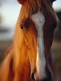 Horse Photographic Print by Scott Barrow