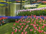Spring Tulips by Stream Photographic Print by Mark Bolton