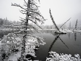 Pond and Forest in Winter Photographic Print by John Eastcott & Yva Momatiuk