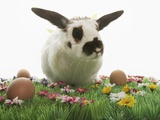 Bunny Rabbit on Grass With Flowers and Brown Eggs Photographic Print