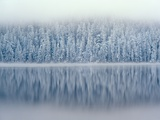 Lost Lake and Snow-Covered Douglas Firs Photographic Print by Steve Terrill