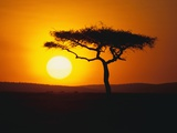 Sunset Behind a Tree Photographic Print