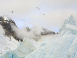 Gulls Flying Above Stranded Icebergs at Boothe Island Photographic Print by John Eastcott & Yva Momatiuk
