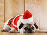 Dog in Santa Suit Photographic Print by Don Mason