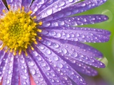 Dewdrops on Flowers Photographic Print by Craig Tuttle