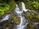 Rushing Water Photographic Print by Craig Tuttle