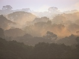 Morning Fog and Tropical Rainforest Canopy in Ecuador Photographic Print by Theo Allofs