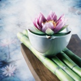 Lotus Flower Balanced on a Bowl Photographic Print by Colin Anderson