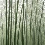 Chinese Bamboo Forest Photographic Print by Yi Lu
