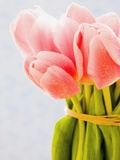 Pink tulips Photographic Print by Ada Summer