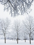 Englischer Garten's Snow Covered Trees Photographic Print by Frank Krahmer
