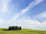 Stand of Cypress Trees in Meadow Photographic Print by Frank Lukasseck