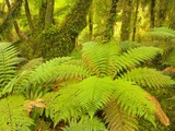 Forest on West Coast of New Zealand's South Island Photographic Print by John Eastcott & Yva Momatiuk