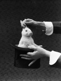 1930s Magician Hands Pulling Rabbit Out Of Top Hat Photographie par H. Armstrong Roberts
