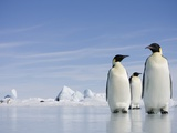 Emperor Penguins in Antarctica Photographic Print by Paul Souders