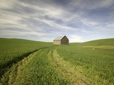 Old Barn in Wheat Field Photographic Print by Terry Eggers